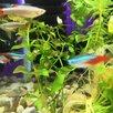 Аквариумные рыбки по цене 30₽ - Аквариумные рыбки, фото 5