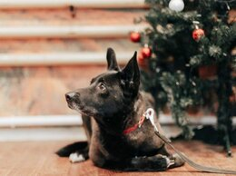 Собаки - Боня идеальная собачка , 0