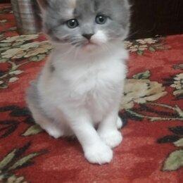 Кошки - Пушистые котята вислоухие, 0