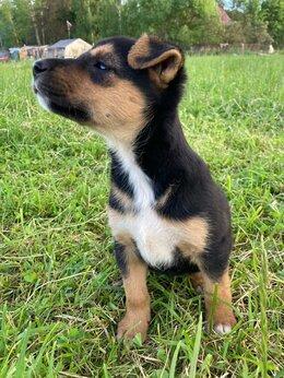 Собаки - Соня - маленький щенок ищет дом, 0