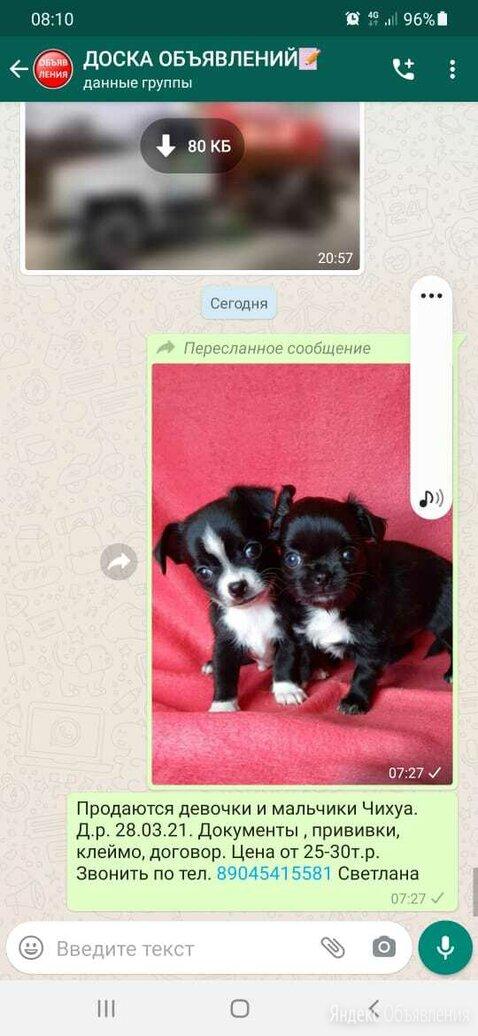 Чихуахуа по цене 15000₽ - Собаки, фото 0