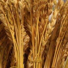 Рукоделие, поделки и сопутствующие товары - Колосья пшеницы для декора и творчества, 0
