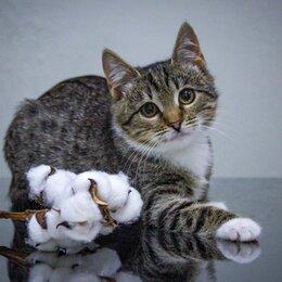 Кошки - Сладкая булочка, котенка БУКЛЯ ищет свою ответственно любящую, идеальную семью!, 0