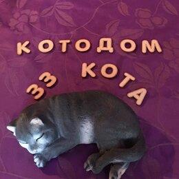 Услуги для животных - Передержка животных. КотоДом «33 Кота», 0