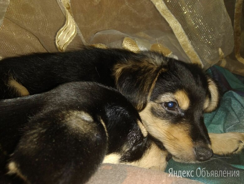 Беспородная собака по цене даром - Собаки, фото 0