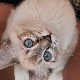 Кошки - Невская Маскарадная, 0