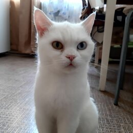 Кошки - Кошечка Као мани, 0