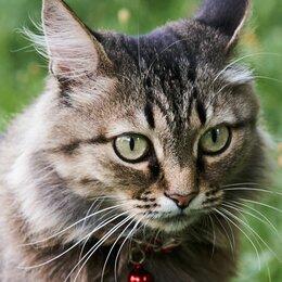 Кошки - Кошка Благородная, 0