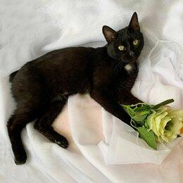 Кошки - Котик молоденький в добрые руки, 0