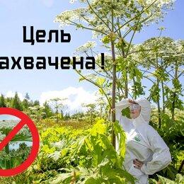 Бытовые услуги - Уничтожение борщевика и сорной растительности, 0
