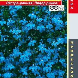 Марки - Лобелия ампельная (серия Regatta) Регатта Скай Блю ПЛ, 0