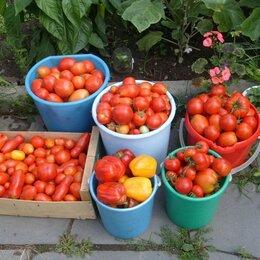 Продукты - Урожай помидоров , 0