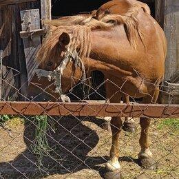 Лошади - Любопытная лошадь, 0