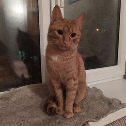 Кошки - Рыжий кот КЕКС, 0
