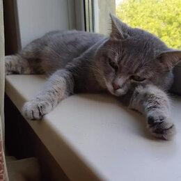 Животные - Кот серый, 0