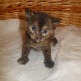 Кошки - Харизматичная кошечка, 0
