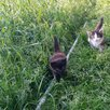 Котята  по цене даром - Кошки, фото 0