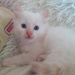 Кошки - Отдам милых котят )))), 0