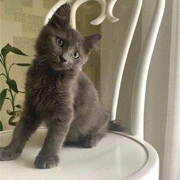 Кошки - Котёнок серый 3 месяца, 0