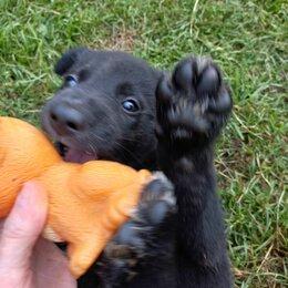 Собаки - Отдам в добрые руки щенков, 0