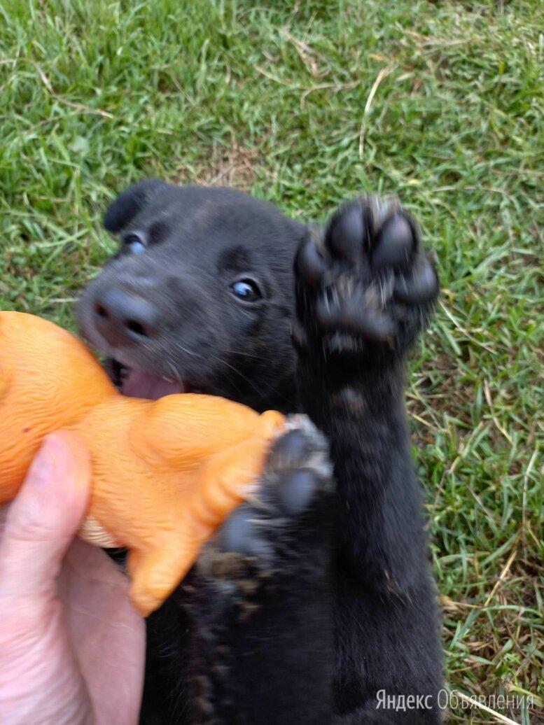 Отдам в добрые руки щенков по цене даром - Собаки, фото 0