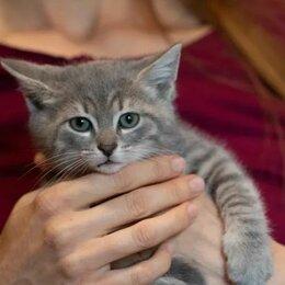 Кошки - Малыш Штейн, подкидыш от домашней кошки, в добрые руки, 0