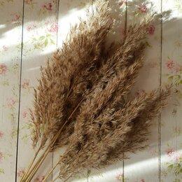 Цветы, букеты, композиции -  Натуральный сухоцвет Тросник, 0