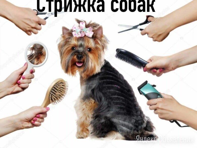 Стрижка собак по цене 500₽ - Услуги для животных, фото 0