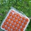 Pop IT по цене 190₽ - Игрушки-антистресс, фото 4