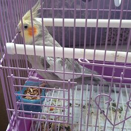 Птицы - Попугайчиков корелла , 0