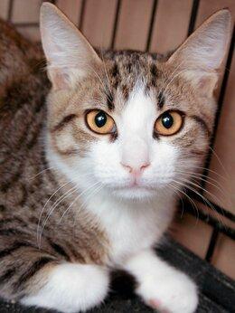 Кошки - Добрый котик Фуфыр с золотым характером 🥰, 0