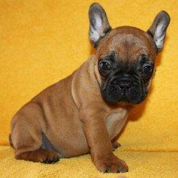 Собаки - Щенок из питомника , 0