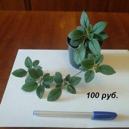 Комнатные растения - комнатные  и садовые растения, 0