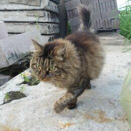 Животные - Найден кот (кошка), 0