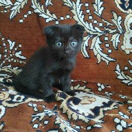 Кошки - Котик и кошечки черные, 0