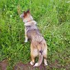 Мона, озорная и позитивная, 1 год по цене даром - Собаки, фото 8