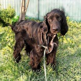 Собаки - Ищет дом замечательный спаниель Витас., 0