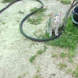 Кошки - Кошки змееловы, 0
