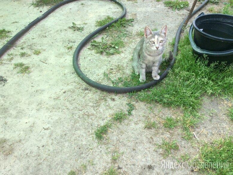 Кошки змееловы по цене даром - Кошки, фото 0