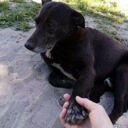 Собаки - Ищут друга, а не хозяина. Тимка и Белка., 0
