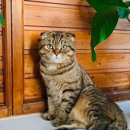 Услуги для животных - Шотландский вислоухий кот вязка, 0