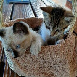 Кошки - Котята даром , 0
