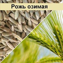 Семена - Продам семена озимая рожь - сорт ПОДАРОК, 0