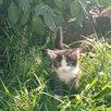 Котята  по цене даром - Кошки, фото 4