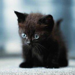 Кошки - Котята в добрые руки, 0