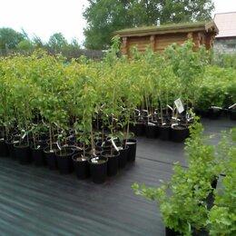 Рассада, саженцы, кустарники, деревья - Питомник растений в Твери, 0
