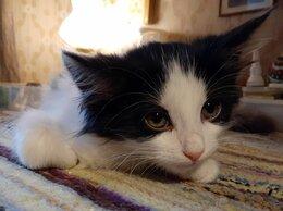Кошки - Котенок  Бимка, спасенный из ямы - ждет самых…, 0