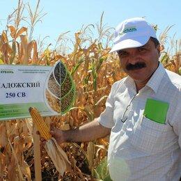 Фасовщики - Сортировщик кукурузы с еженедельными выплатами, 0