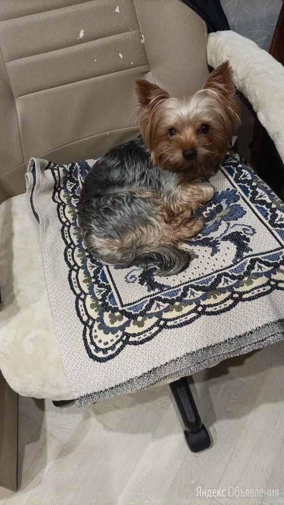 Ушла собака из дома по цене не указана - Животные, фото 0
