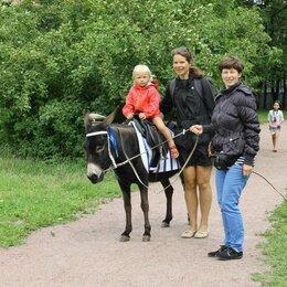Экскурсии и туристические услуги - Верховые прогулки на пони-ослике Айгюль, 0